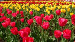 nature red flowers yellow