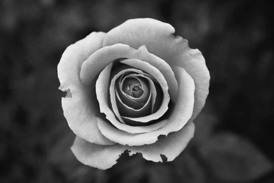 black and white nature flowers close up view
